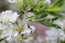 A Glimpse of Spring von JET Adamson