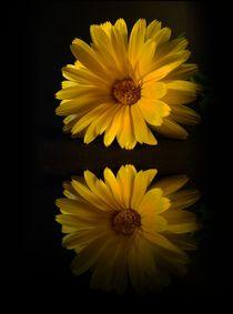 Spiegelung  by Elke Balzen