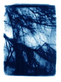 Veil by Sharon Harvey