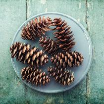 pine cones von Priska  Wettstein