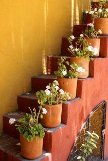 FLOWERY STAIRCASE San Miguel de Allende Mexico von John Mitchell