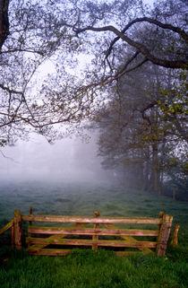hinterm weidetor: nebel by helmut krauß