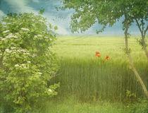 summertime by Franziska Rullert