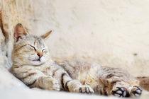 Ruhende Katze von sandarine