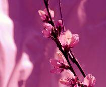 Blüten by tinadefortunata