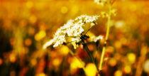 Wiesenblumen by tinadefortunata