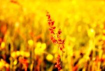 Wiesenblumen von tinadefortunata
