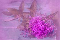 lila mädchenhaft romantisch by tinadefortunata