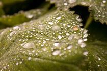 Nature-drops-by-lotusaqua-d4epmkl