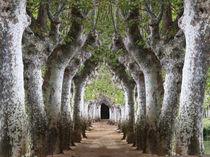 Woodland Walk by Mark Bunning