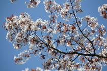 Spring in Berlin by Bianca Baker