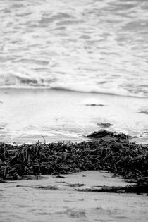Seaweed-black-and-white