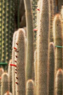 Soft Cacti von Bianca Baker