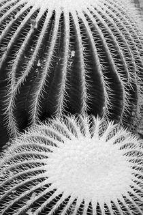Cacti von Bianca Baker