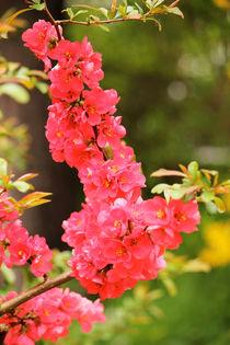Flowers by Bianca Baker