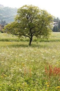 Lonely Tree von Bianca Baker