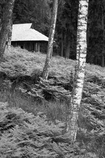 Latvia-national-park