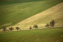 Patchwork of fields von photogatar