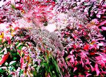 Virtual Garden by Assie Schell