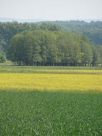 Rapsfeld im Frühling by Ka Wegner