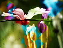 Colors by Agnieszka  Grodzka