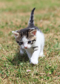 'Katze' by Falko Follert