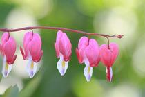 Heart Flowers von Tobias Pfau