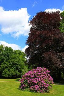 Rhododendron mit Rotbuche von Wolfgang Dufner