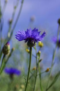 Wildblumen II von Tanja Riedel