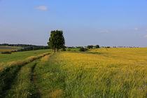 Weg durch den Sommer by Wolfgang Dufner