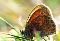 Schmetterling  von Julia Delgado