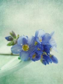 douceur by Priska  Wettstein
