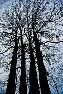 A Giant Memorial Tree-Beech by Engin Sezer