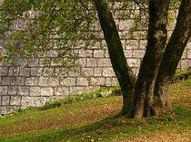 Triple tree by photogatar