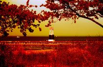 Red Afternoon von Milena Ilieva