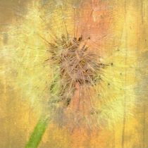 Soft Dandelion Poster  von Julia Delgado
