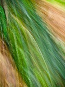 Waldspaziergang no. 11 by arteralfo