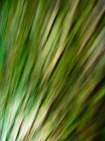 Waldspaziergang no. 12 von arteralfo