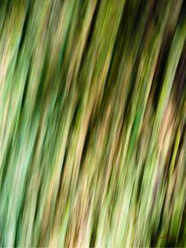 Waldspaziergang no. 13 von arteralfo