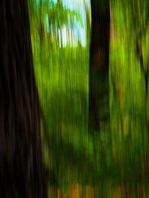 Waldspaziergang no. 16 von arteralfo
