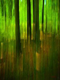 Waldspaziergang no. 19 by arteralfo