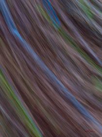 Waldspaziergang no. 30 von arteralfo