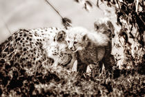 Cheetah Mom with her babies by Maggy Meyer
