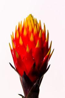 feuer der natur by helmut krauß