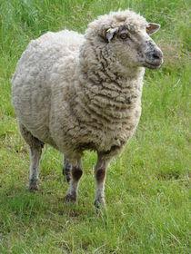 Schaf von Ka Wegner