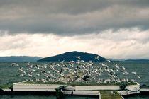 Seagulls by Stas Kulesh