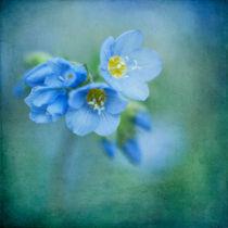 fleurie von Priska  Wettstein