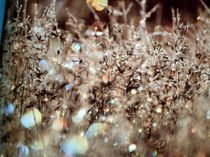 Natur pur 5 von Heide Pfannenschwarz