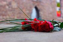 Red-roses-by-sandracapljak