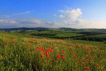Wo die Mohblumen blühen by Wolfgang Dufner